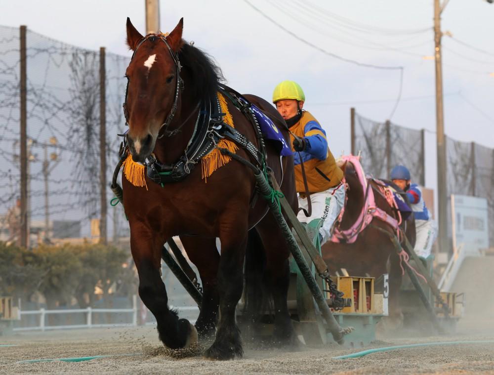 予想 ばんえい 競馬 ばんえい競馬予想の仕方